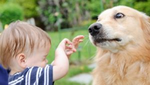 What Are the Various Charges in Dog Bite Cases. Miami Injury Attorney