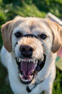 Miami Dog Bite Lawyer