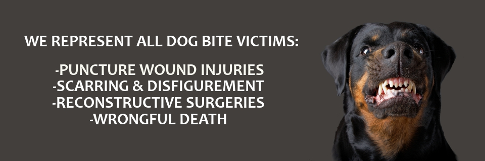 Miami Dog Bite Attorney