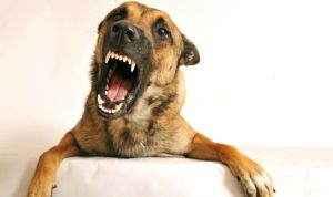 Miami Dog Bite Attorney - Common Dog Bite Owner Issues
