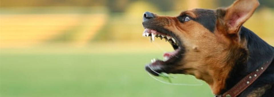 What to do if You are Bitten by a Dog - Speak with a Miami Dog Bite Lawyer
